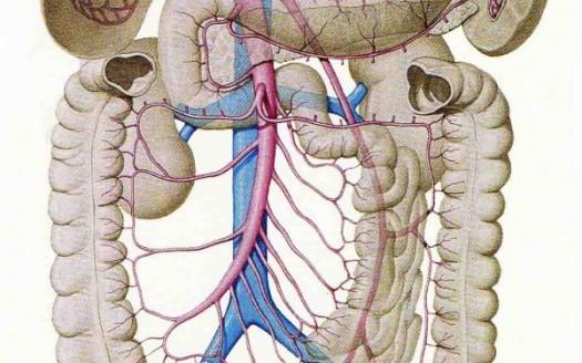 disbiosi intestinale intestino