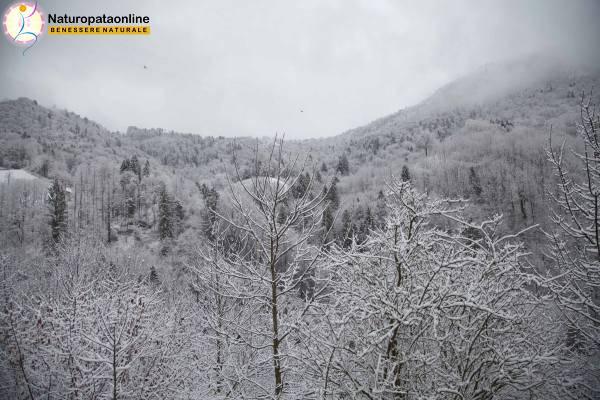 bosco neve ghiaccio