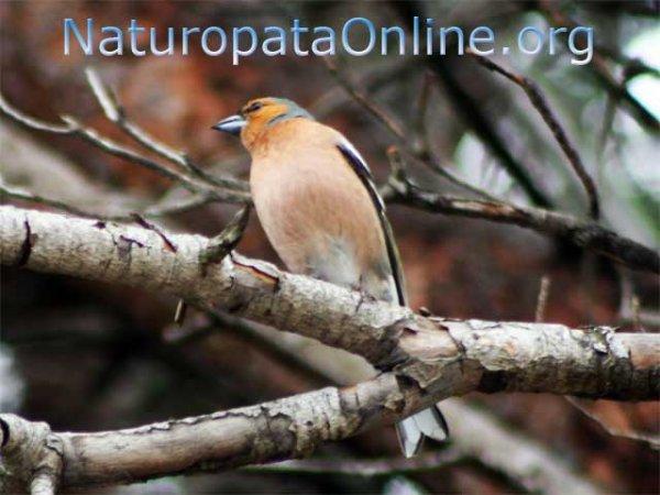 uccellino ramo