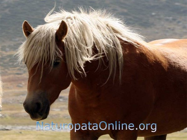 cavallo marrone con criniera bionda