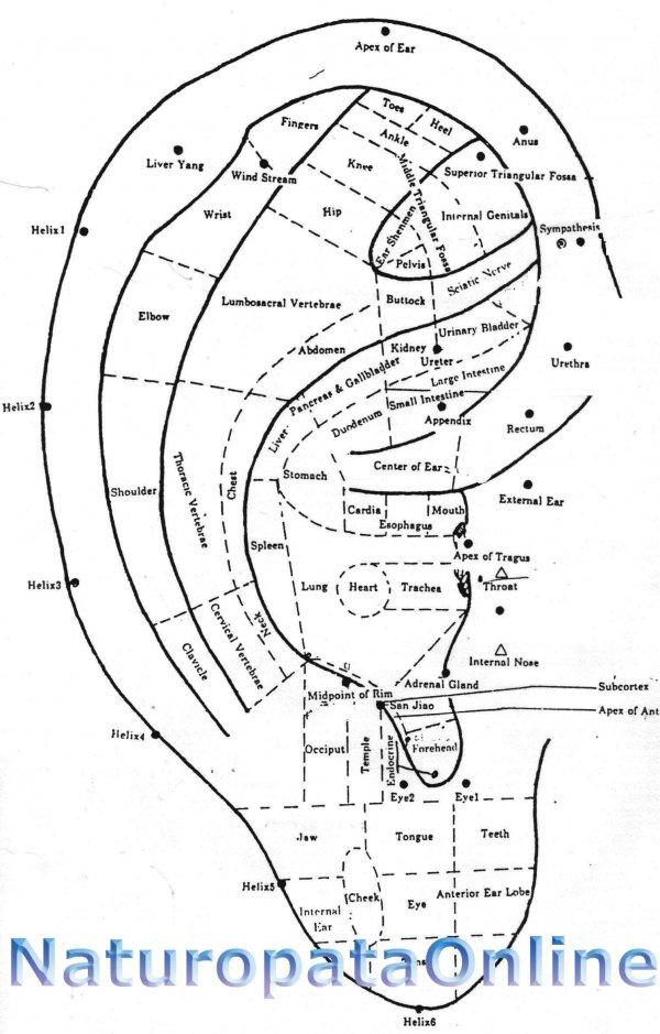 mappa punti auricoloterapia