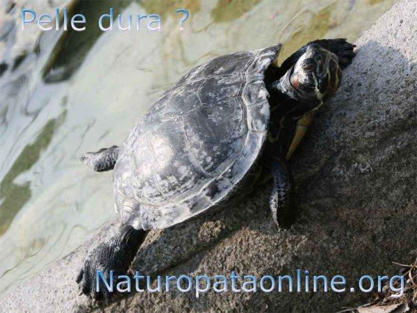 tartaruga su roccia