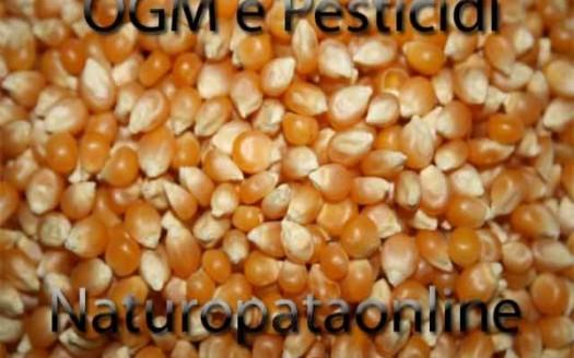 chicchi mais uso pesticidi