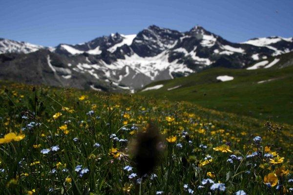 fiori campo montagna