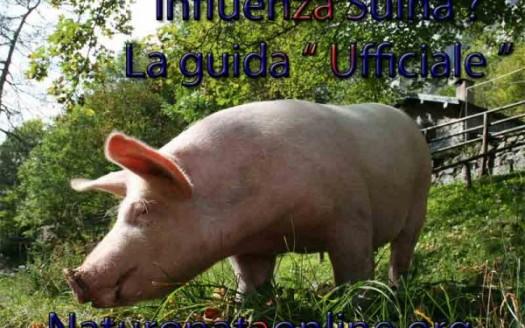maiale rosa nel prato