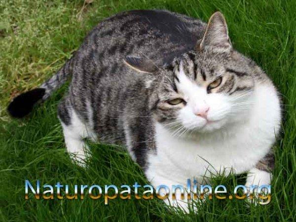 stress geopatico sonno gatto