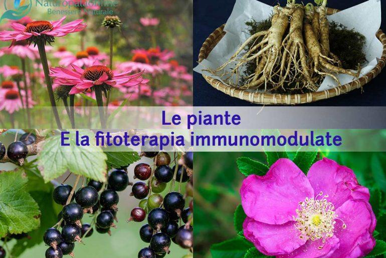 Le-piante-e-la-fitoterapia-immunomodulate