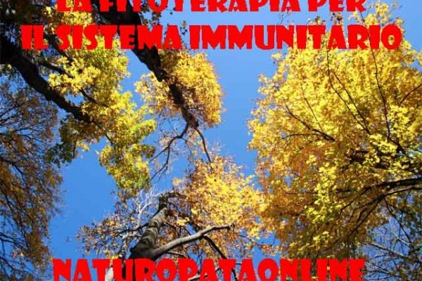 Alberi foglie gialle