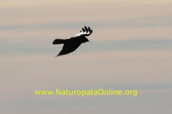 uccello in volo emozione
