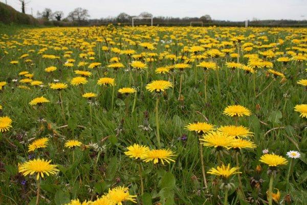 campo fiorito marzo