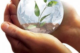 mani sfera foglie