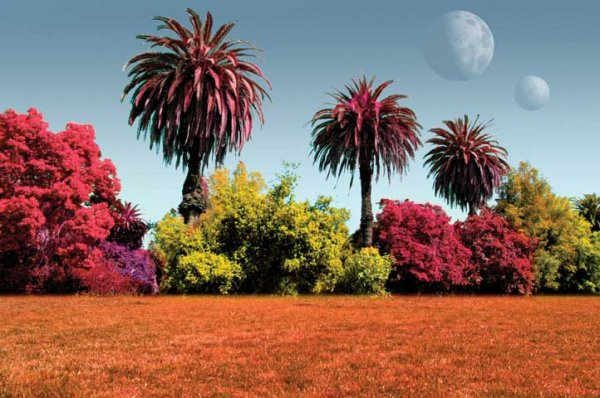 Palme e cespugli giardino