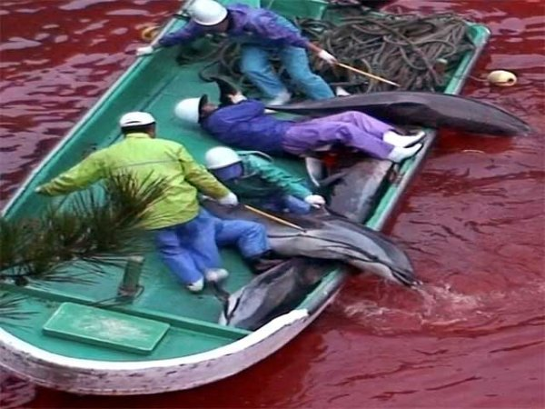 sterminio tonni mare sangue