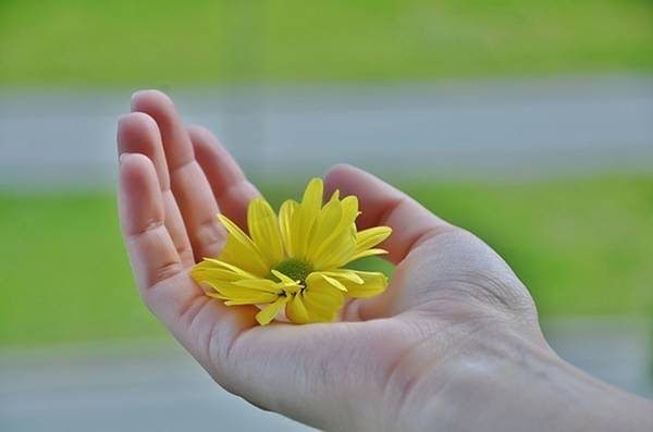 mano fiore giallo