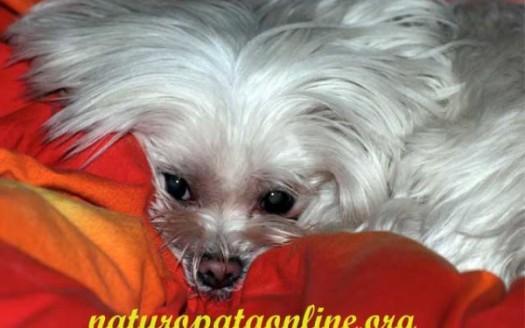 reiki trattamenti energetici cane