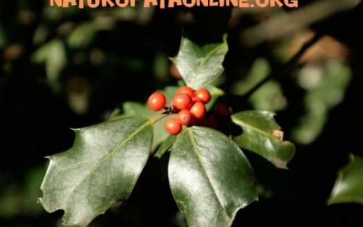 Elenco piante per curare i malesseri invernali for Elenco piante sempreverdi