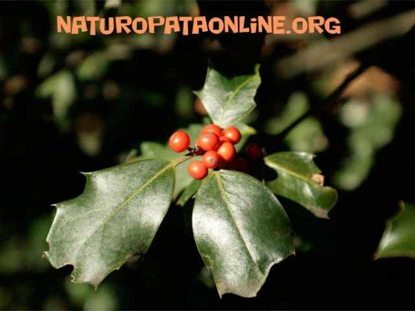 Bacche rosse malesseri invernali