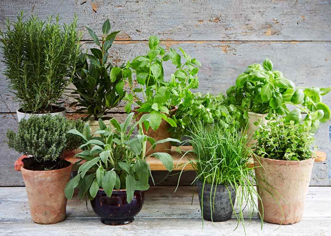 piante officinale per contrastare malattie alla prostata