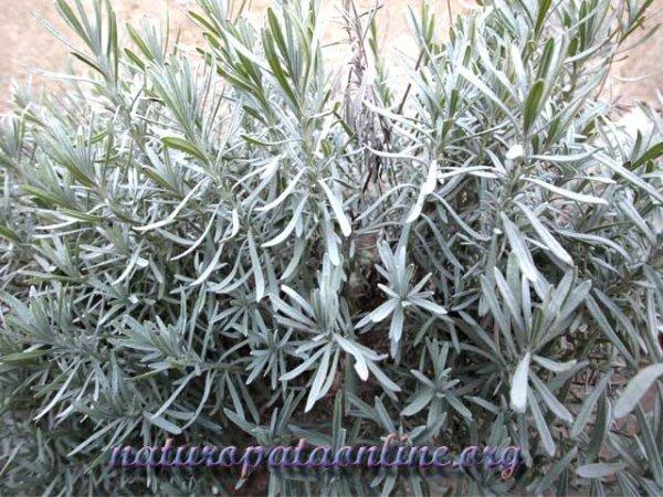 pianta foglia verde calcio minerale