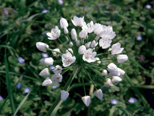 fiori campo aprile