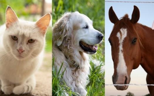 pranoterapia gatto cane cavallo