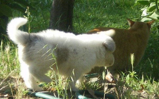 cane gatto reiki