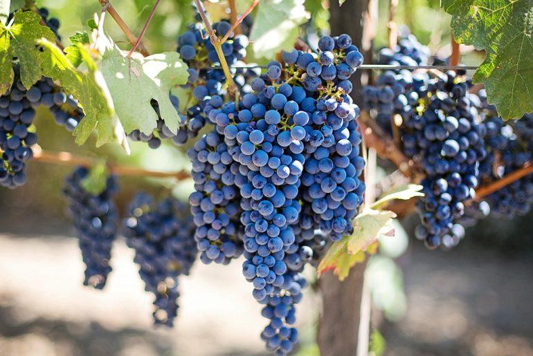 frutta-e-verdura-di-settembre