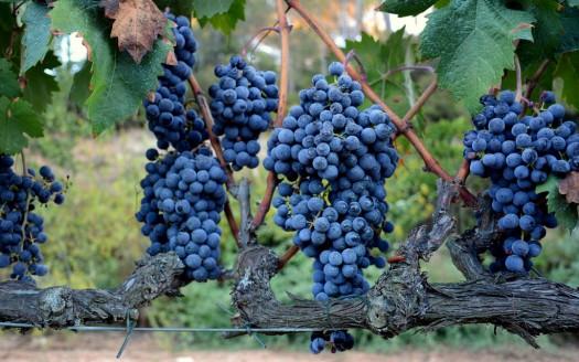 Frutta di ottobre