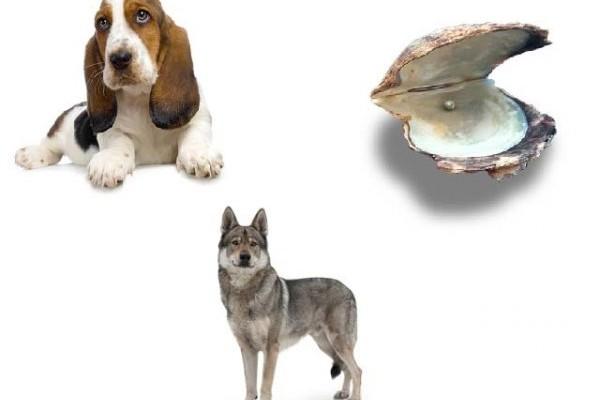 enneagramma cane lupo ostrica