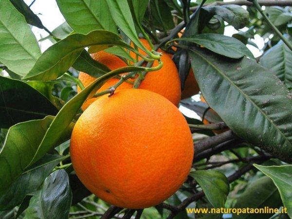 arancia ramo foglie