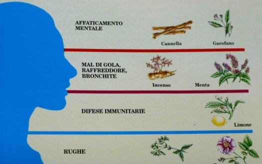 aromaterapia oli essenziali introduzione