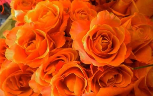 Arancione colore della concentrazione e distacco dalle - Immagine del mouse a colori ...
