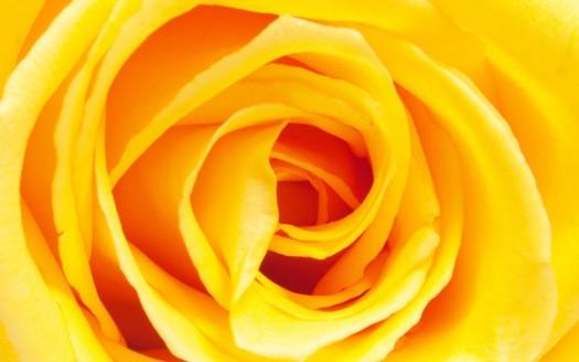 Giallo colore luminoso utilizzarlo stimola la razionalit for Oggetti di colore giallo