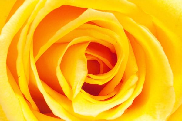 colore-giallo-cervello