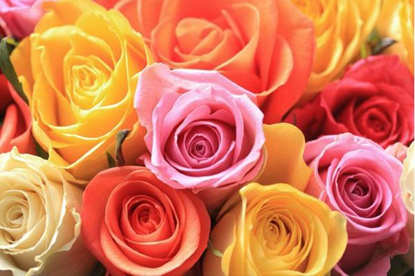 rose-cromoterapia