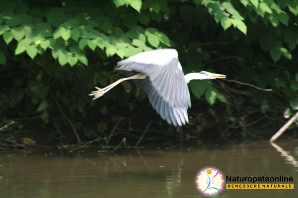 uccello volo acqua