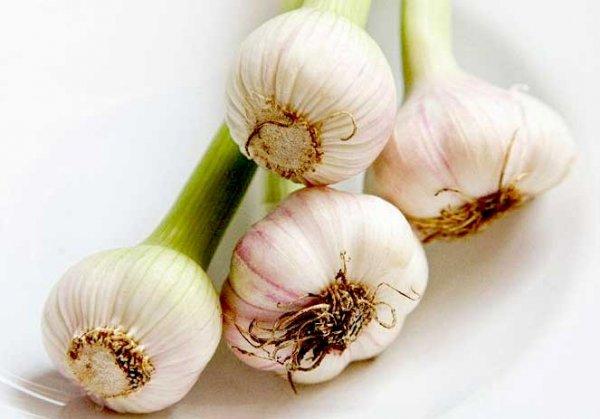 teste aglio