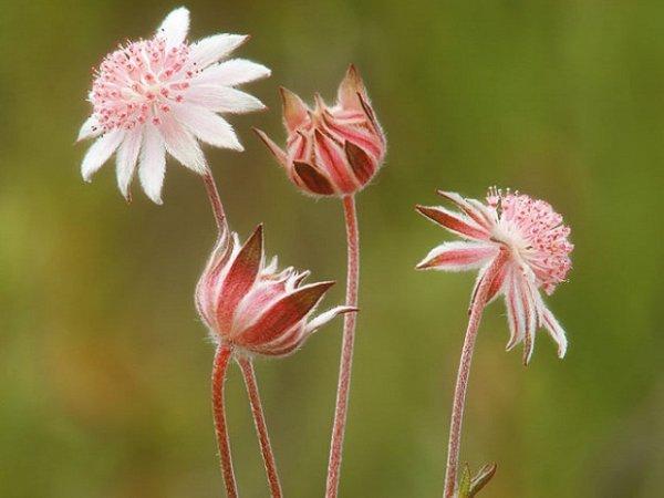 floriterapia fiori prato