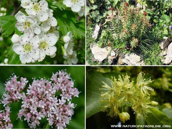 erbe fiori bianchi rosa gialli