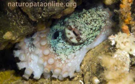 calamaro-fondale
