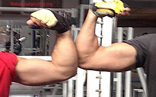bicipite-body-building