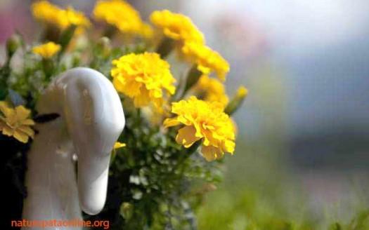 geranio-oca-ceramica