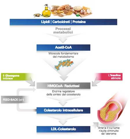 ciclo-colesterolo-alimentazione