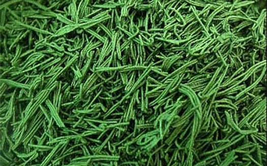 alga-sbirulina