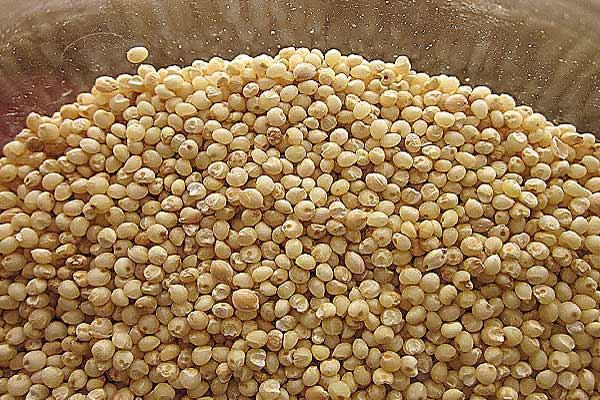 Miglio-cereale-glutine