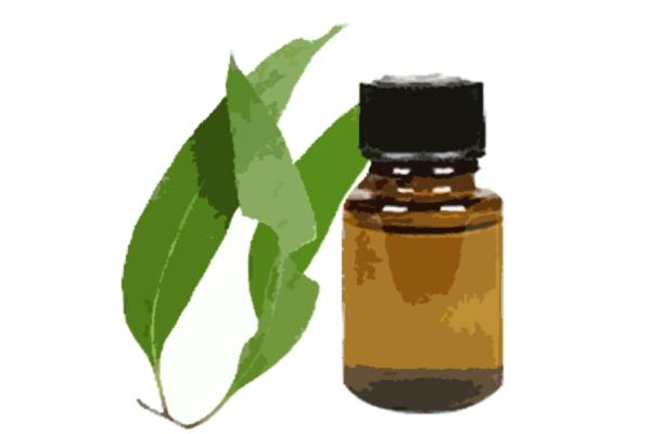 olio-essenziale-ecaulipto