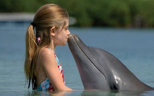 delfinoterapia terapia assistita con delfini per bambini autistici