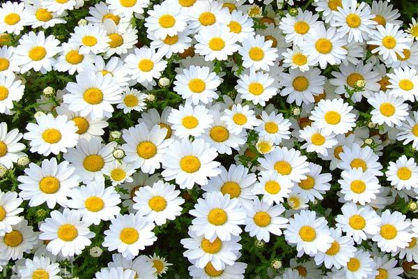 margherita-campi-fiore