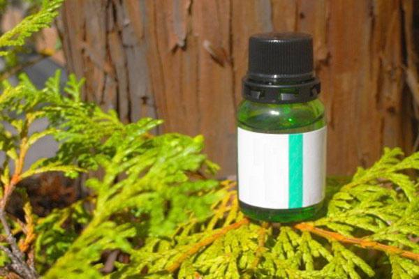 olio-essenziale-cipresso-emorroidi-circolazione