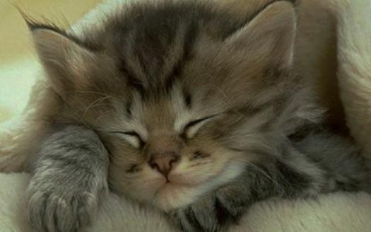 Il significato dell 39 amore per il gatto e come conoscerlo naturopataonline - Gatto pipi letto ...